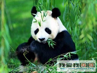 表情熊猫qq图片+可爱熊猫图片被坏你了带表情功夫包图片