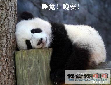 宝宝熊猫qq表情+乖巧熊猫图片(5)可爱功夫吐血表情包图片
